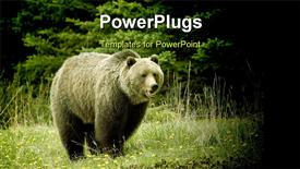 Grizzly bear in a clearing in Jasper National Park Alberta powerpoint design layout