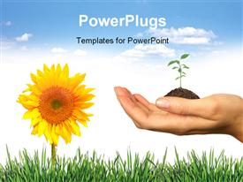 PowerPoint template displaying fresh Elements of Spring: Grass Seedling and Sunflower on White. Easily Extract for your Designs