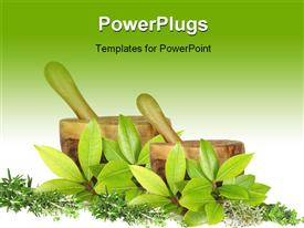 PowerPoint template displaying fresh herb selection of rosemary golden thyme bay leaves silver thyme and common thyme