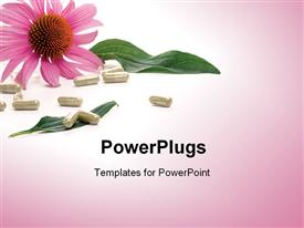 PowerPoint template displaying close-up of Echinacea extract pills and fresh Echinacea flowers