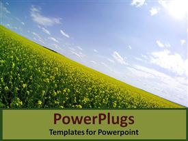 PowerPoint template displaying sloping hillside covered in flowers in the background.