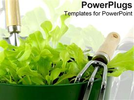 Pot of freshly grown green lettuce powerpoint design layout