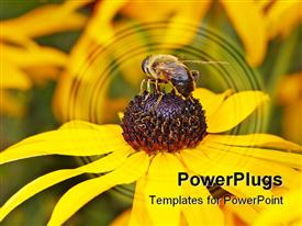 PowerPoint template displaying a beautiful depiction of a sunflower and a bee