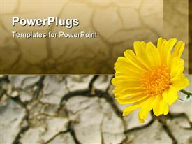 PowerPoint template displaying yellow flower, sunflower, cracked soil, desert, arid terrain background