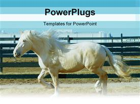 PowerPoint template displaying elegant pure white horse striding in its wooden stable