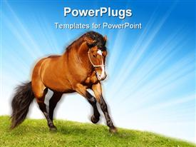 Beautiful stallion galloping on a green grass powerpoint theme