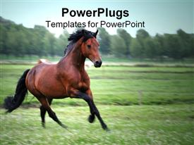 Chestnut horse powerpoint design layout