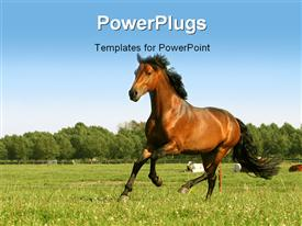Running chestnut horse  agriculture presentation background