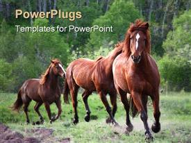 Horses chasing each other across a meadow template for powerpoint
