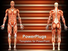 PowerPoint template displaying depicting the muscle structure of the human body - male model