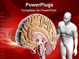 Brain and human body in color background powerpoint theme