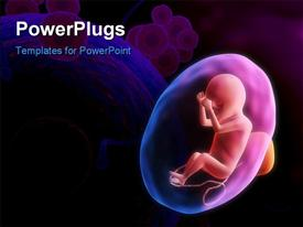 PowerPoint template displaying a human fetus