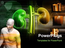 PowerPoint template displaying human anatomy with kidney structure in background