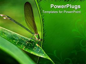 PowerPoint template displaying insect sitting on the leaf of maize with green background