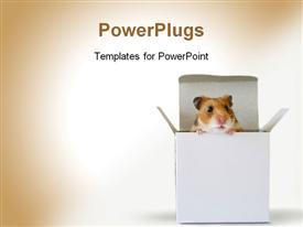 Adorable little hamster inside a box powerpoint theme