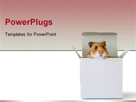 Adorable little hamster inside a box powerpoint template
