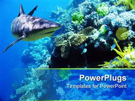 Shark swimming over reef with fish presentation background