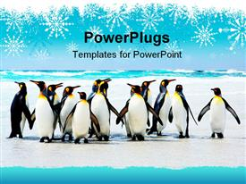 PowerPoint template displaying group of penguins on an icy background with falling snowflakes