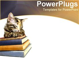 PowerPoint template displaying kitten sleeping on stack of books