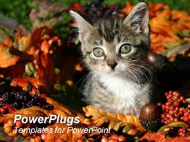 PowerPoint template displaying a beautiful kitten and a number of fruits