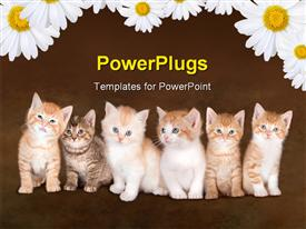 PowerPoint template displaying family of six cute kittens over red background