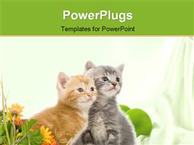 PowerPoint template displaying two grey and brown kitten beside colorful flower over white background