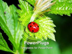 PowerPoint template displaying red and black lady bird on a green leaf