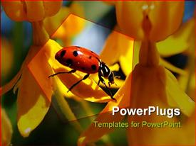 PowerPoint template displaying ladybug on yellow flowers on a sunny spring day