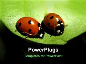 PowerPoint template displaying black background with two cute lady bugs on green leaf