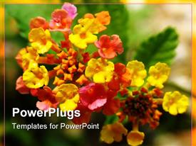 Lantana flower, or butterfly bush powerpoint template