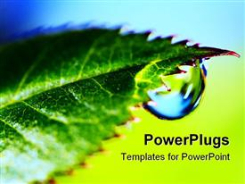PowerPoint template displaying water droplet from apex of fresh green leaf