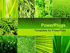 PowerPoint template displaying lots of tiles showing diffeent green plants with different leaf shapes