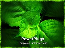 PowerPoint template displaying green leaves close-up - spiral of life, genesis