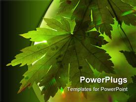 PowerPoint template displaying green maple leaf and rainbow rays sun in forest summer scene design background
