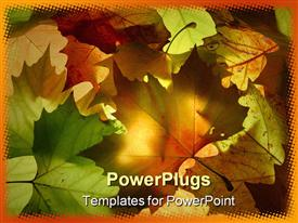 Selection of autumn leaves which are backlit presentation background