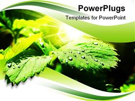 PowerPoint template displaying wet green leaves with sparkle shot close up