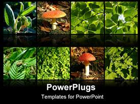 PowerPoint template displaying the depiction of nature with the help of mushrooms