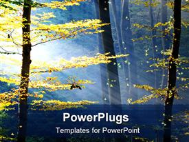 PowerPoint template displaying daylight view of lots of trees in an autumn season