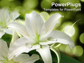 PowerPoint template displaying white flower arrangement, weddings, floral design, florist