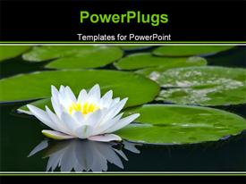 White water-lily and its reflection powerpoint theme