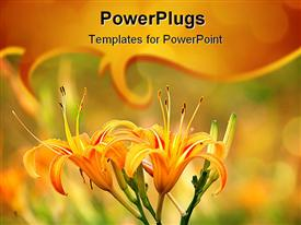 PowerPoint template displaying two yellow lily flowers on a natural blurry  background