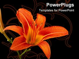 PowerPoint template displaying orange lily flower Lilium in the background.
