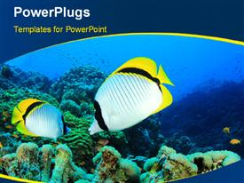PowerPoint template displaying pair of Lined Butterfly fish on reef with curves in the foreground