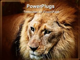 PowerPoint template displaying male adult Lion with full mane on a brown background