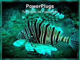 PowerPoint template displaying lion fish (Devil Fire fish) swimming in the warm waters of the Indian Ocean in the background.