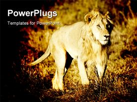 PowerPoint template displaying a lion with a jungle in the background