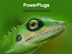 PowerPoint template displaying close-up of green tree lizard on green background