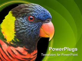Close-up bird portrait of Rainbow Lorikeet presentation background