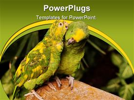 PowerPoint template displaying yellow-crowned parrot teasing at its partner