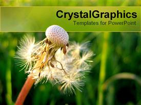 PowerPoint template displaying airy dandelion with blurry green vegetation as background